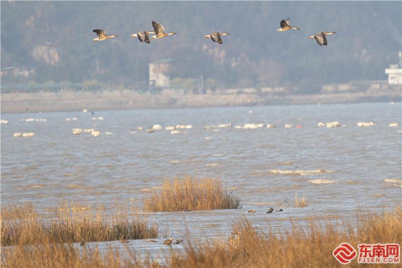 福州长乐闽江河口国家湿地公园迎